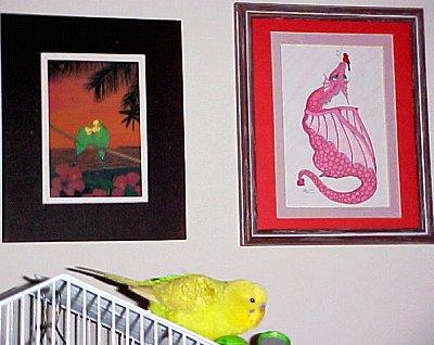 Pidge with bird artwork