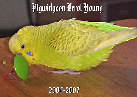 Goodbye, Pigwidgeon